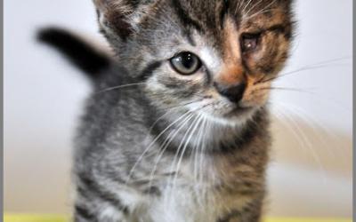 Kocięta – obecnie nie przyjmujemy nowych
