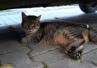 Pomoc kotom wolno-żyjącym.