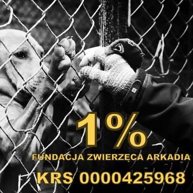 Przekaż 1% zwierzętom!