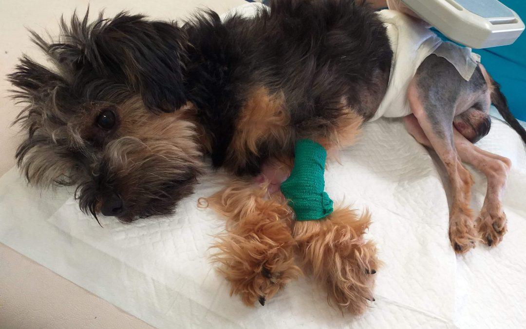 Ratujemy psa z wypadku!
