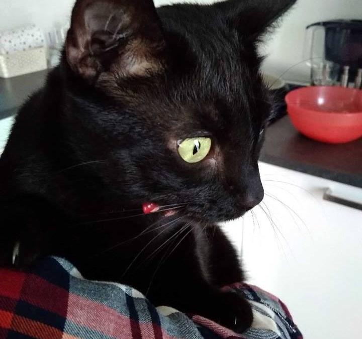 HUZAR – wraca z adopcji po 3 latach.
