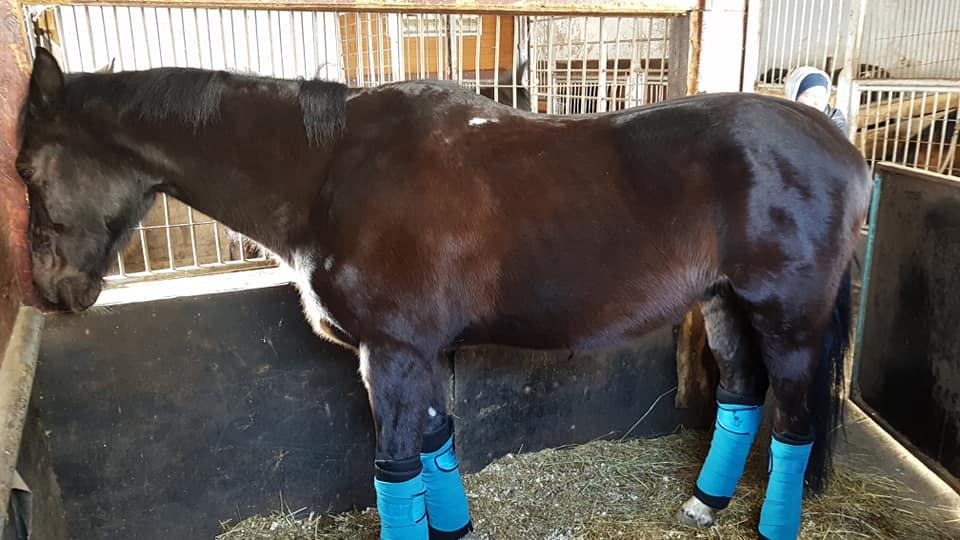11 letni koń z wyrokiem śmierci