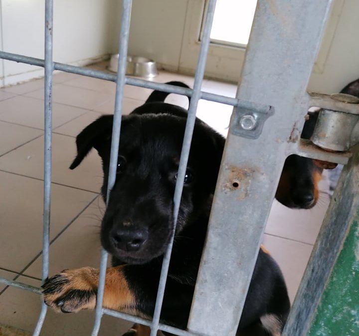 Bezdomny pies – co robić?