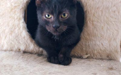 Brak karmy dla kotów wolnożyjących!