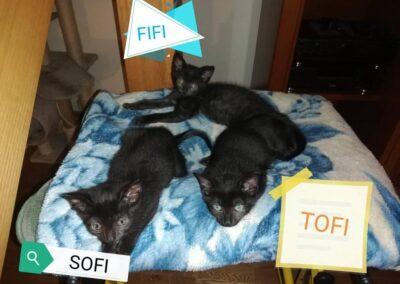 Sofi, Fifi i Tofi