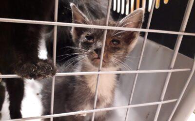 Koty z Siemianowic